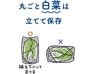 丸ごと白菜は立てて保存