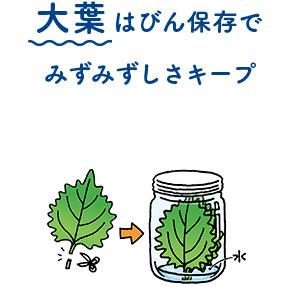 大葉はびん保存で みずみずしさキープ