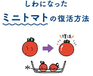 しわになったミニトマトの復活方法