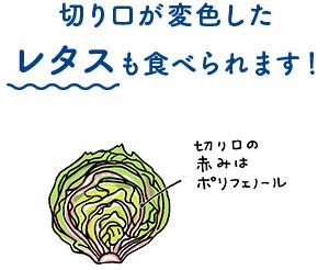 切り口が変色したレタスも食べられます